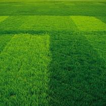 Twój piękny trawnik - plener.pl