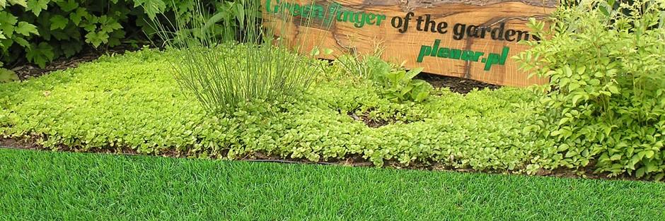 Lato na trawniku – letnia pielęgnacja trawnika